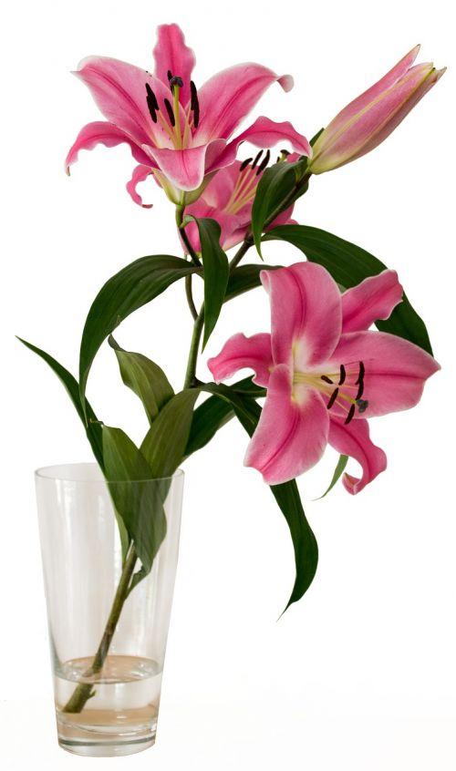 flower vase flower vase