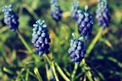 flower flowers nature