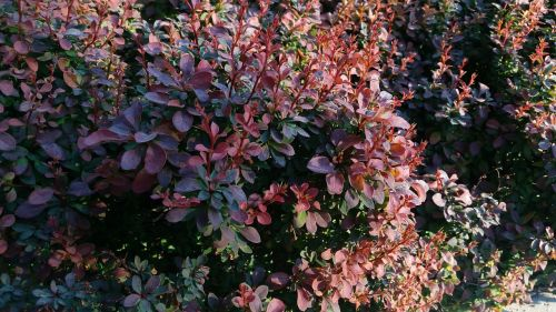 flower nature background