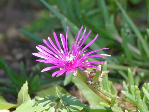 flower meadow mountain flower