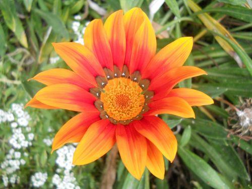 flower orange flower orange