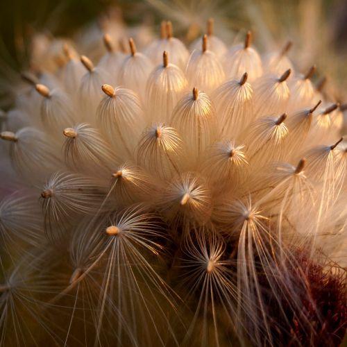 flower macro doré