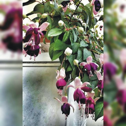 flower love ks