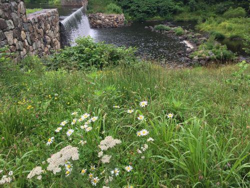 flower landscape nature