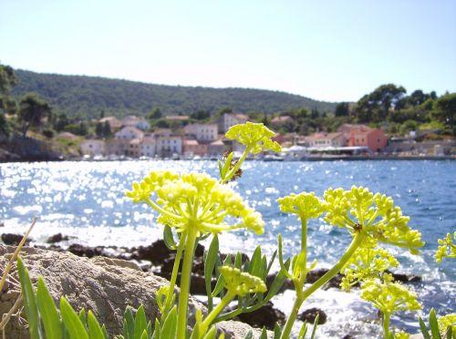 flower sea beach