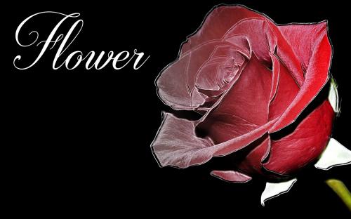 flower fund art