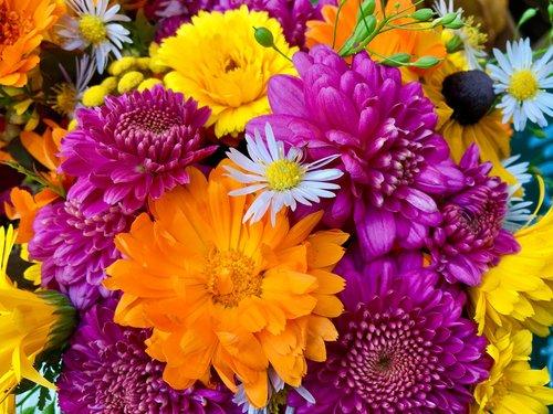 flower arrangement  colorful  still life