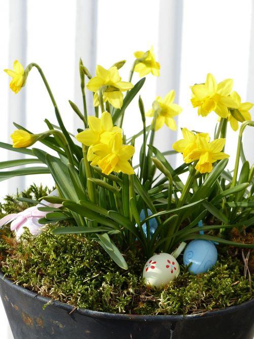 flower arrangements pot eggs