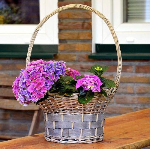 flower basket basket plant