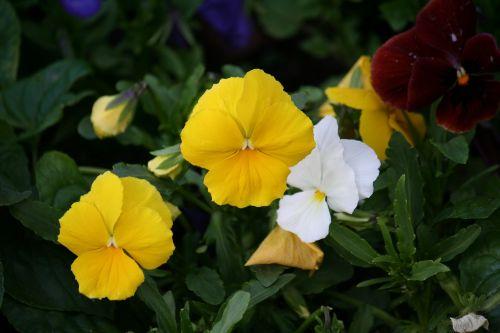 flower bed dacha raznotsvet
