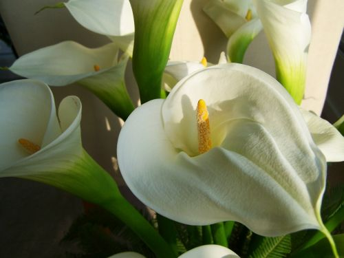 flower bouquet white calla lily cut flower