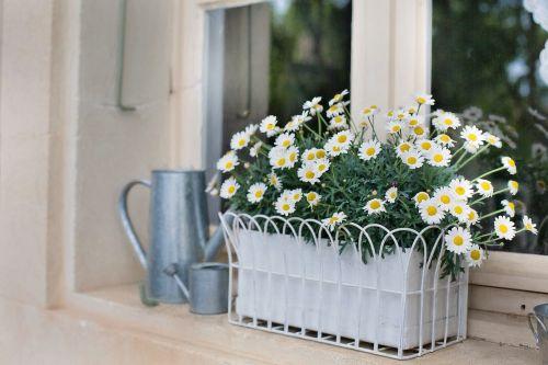 flower box planter daisies