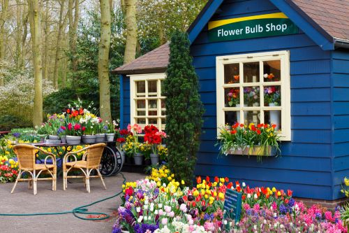 Flower Bulb Shop