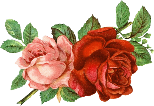 flower clipart floral clipart roses clipart