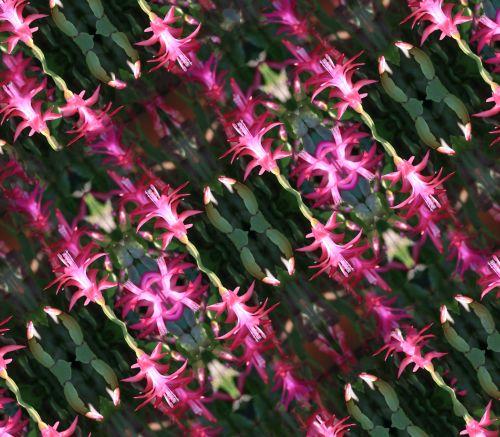 krabas & nbsp, kiškis, sultingas, gėlės, rožinis, pakartoti, įstrižainė, gėlių įstrižainė