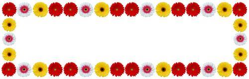 flower frame gerbera flower color