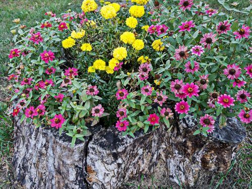 Flower Garden In Tree Stump