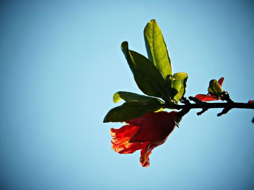 flower granada flower granada