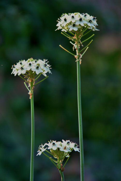 Flower Heads Triptique