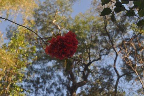 flower heart  heart in bloom  love is in the air