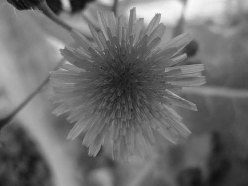 gėlė, makro, gamta, mažas, gėlių makro 9