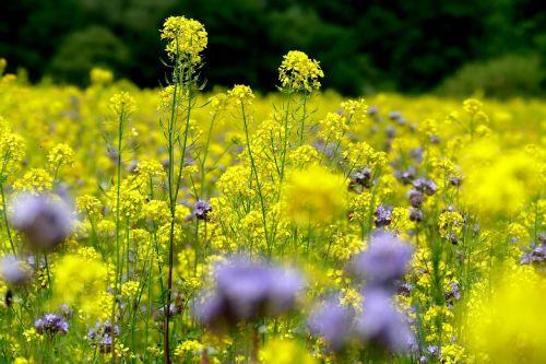 flower meadow summer nature