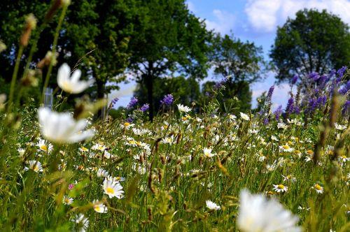 flower meadow trees meadow