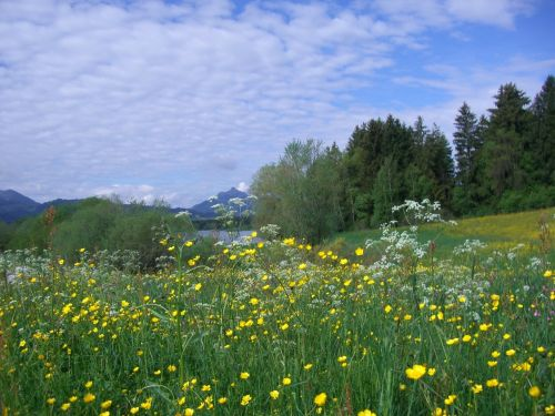 flower meadow gruentensee greened