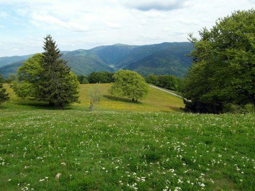 flower meadow summer summer meadow