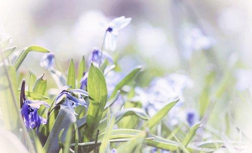 flower meadow  bluebell  grass