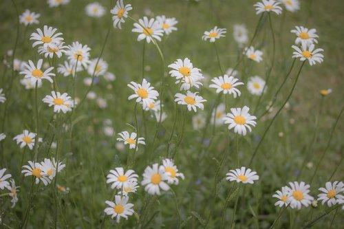 flower meadow  flower  meadow
