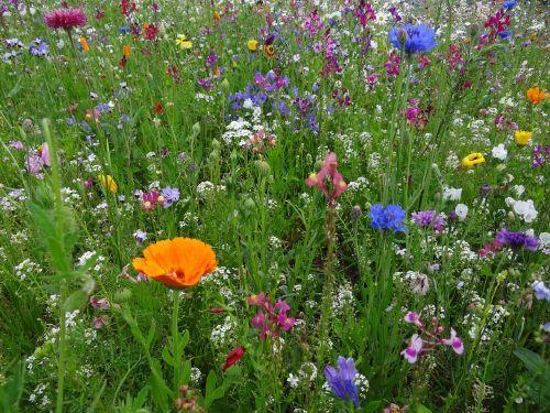 flower meadow spring meadow flowers