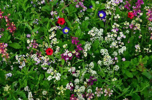 flower meadow wildflowers wild flowers