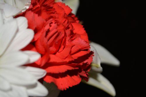 Flower Petals Blossoms Love You