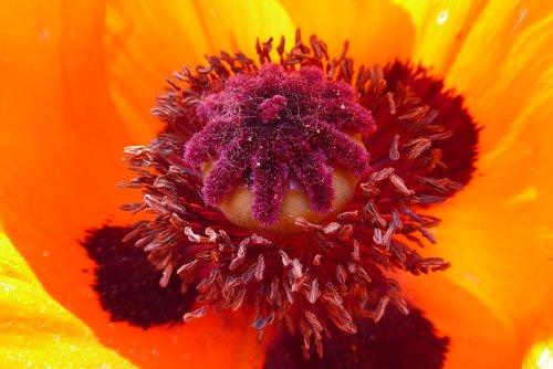 flower plant  nature  petal