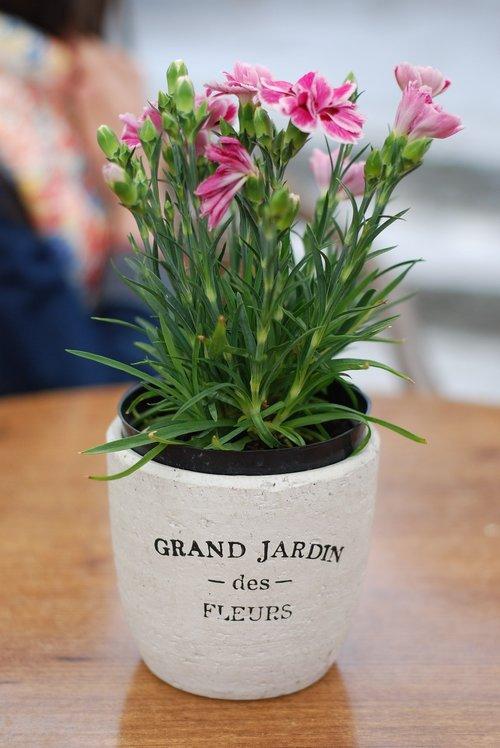 flower pot  flowers  france