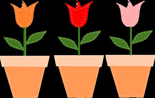 flower pots pots tulips