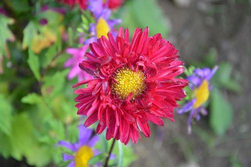 flower red flower pistile yellow green leaves