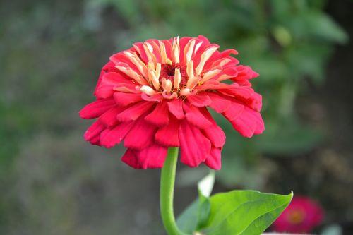 flower red flower green leaves bouquet