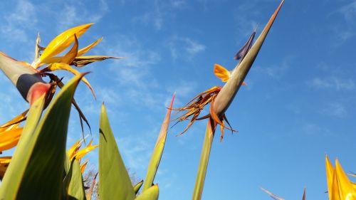 flower sky bird of paradise paradise