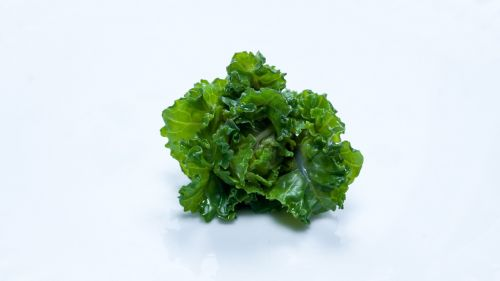 flower sprout vegetable brussel sprout
