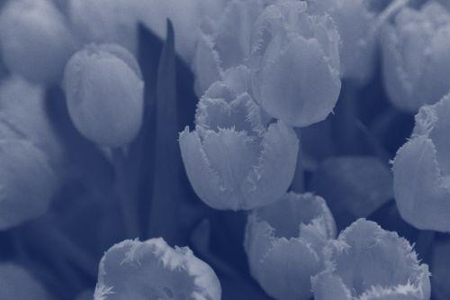 Flower, Vintage Image