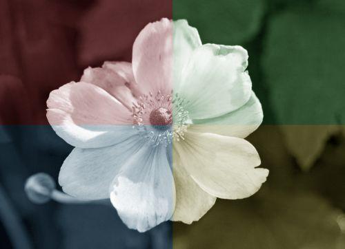 Flower Vintage Toning