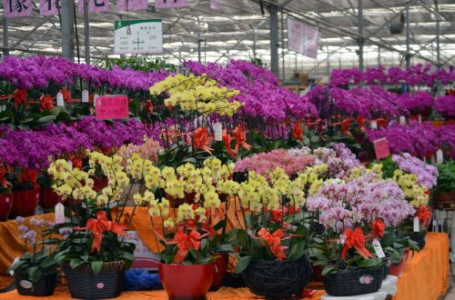 Flower Warehouse