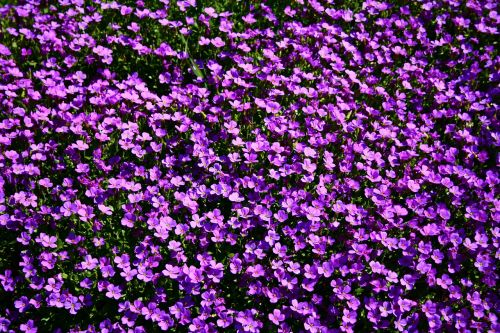 flowerbed flowers summer