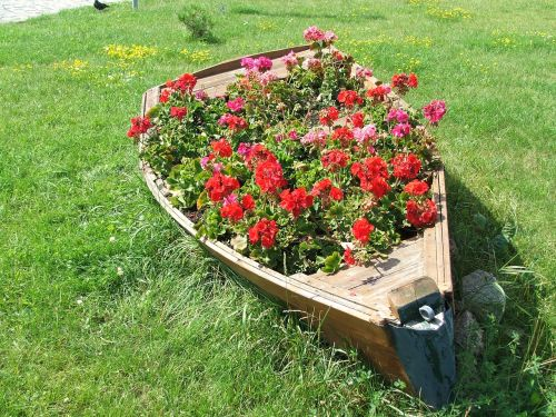 flowerbed flowers old boat