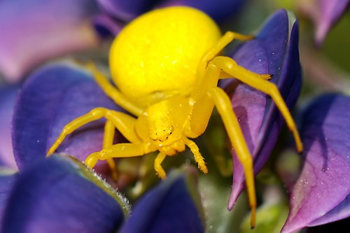 flowerbed  insect  macro