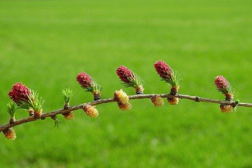 flowering  plant  botany