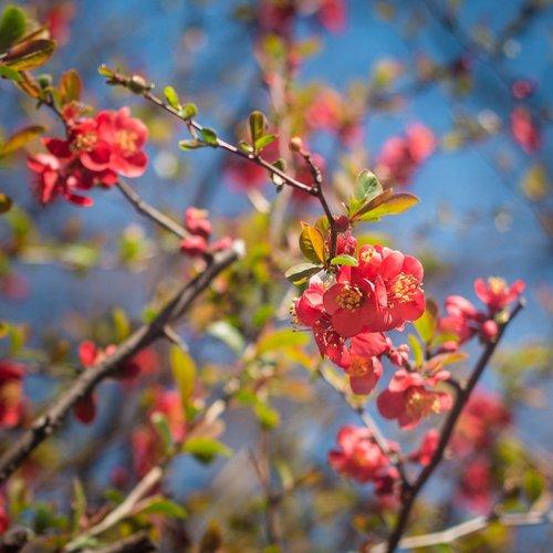 flowering  flowers  spring