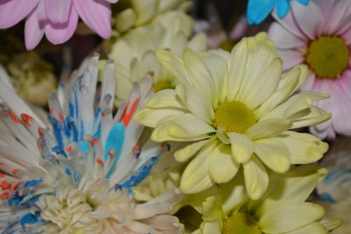 geltona, rozės, meilė, gėlė, fonas, taika, žiedlapis, žiedas, Sveik, pasiilgau tavęs, Vestuvės, makro, žydintys gėlės taikos meilės makro